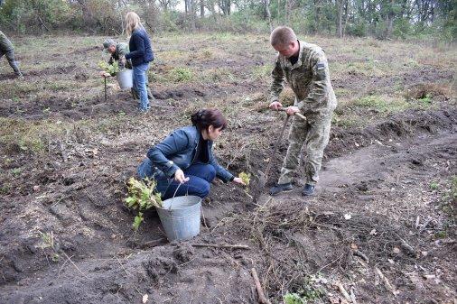 Двадцять три гектари лісу висадили на Кіровоградщині