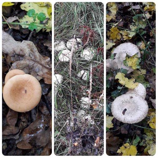 Замість збирати гриби - робіть будь ласка фотографії